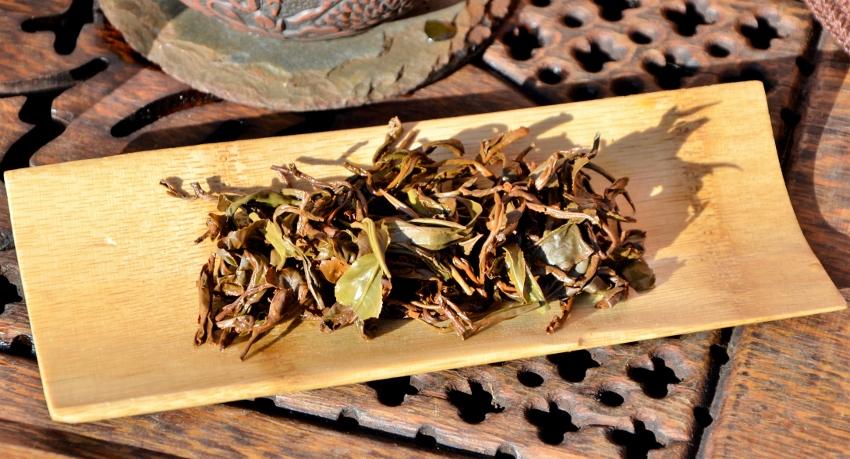 Erste Frühlingsernte (First Flush) des Doke Teegarten in Bihar, Indien