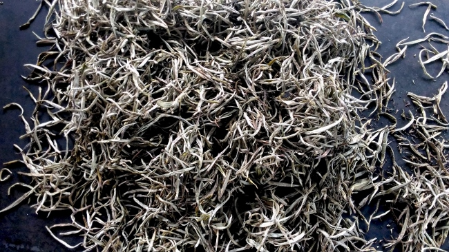 white silver needle tea - glowing in the snow-white of its dense hair coating