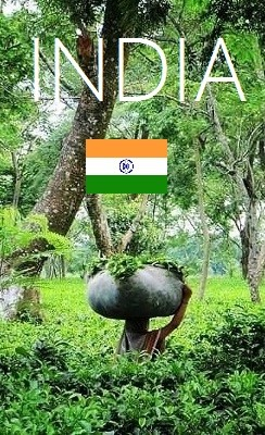 Tee aus Indien