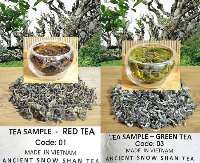 Ancient Snow Shan Grüner Tee und Ancient Snow Shan Schwarzer Tee : Artisan Arbor-Tees aus Ha Giang, Nordvietnam