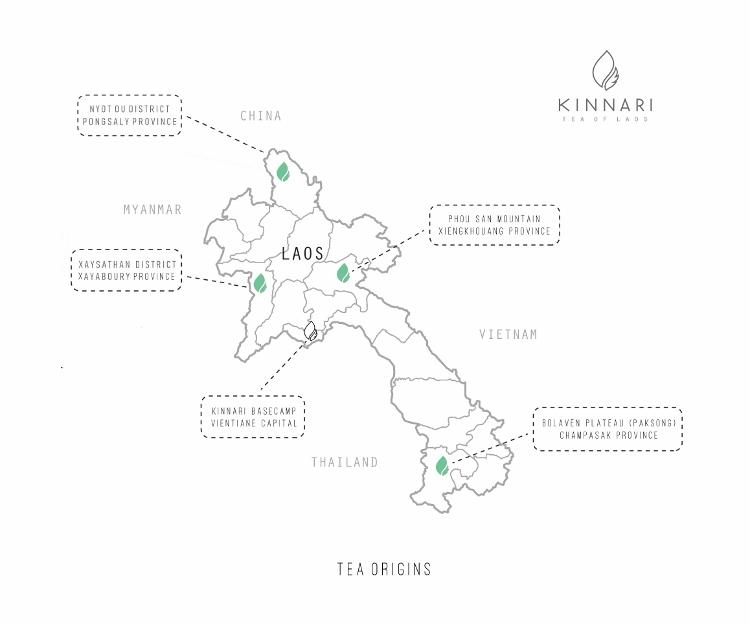 Kinnari Tea Map - Kinnari tea cultivation areas in Laos : Xaysathan (Xayabouri), Xiengkhouang, Nyot Out (Pongsaly) and Bolaven Plateau