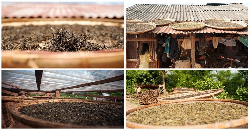 Endtrocknung der fertig verarbeiteten Teeblätter in der Sonne - Distrikt Nyot Ou, Provinz Pongsaly, Nord-Laos