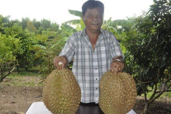 Un homme tente de soulever les deux durians géants, respectivement 12 et 13 kilos, dans un verger la province de Nakhon Ratchasima