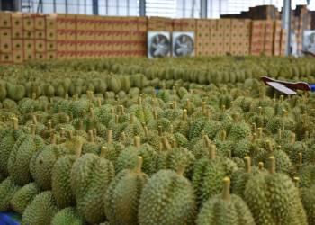 La demande chinoise de durians thaïs explose en avril