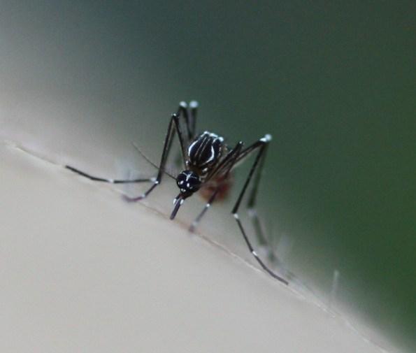 Le nombre de cas de dengue en Thaïlande a dépassé les 50 000 et 65 personnes en sont décédées au 27 août