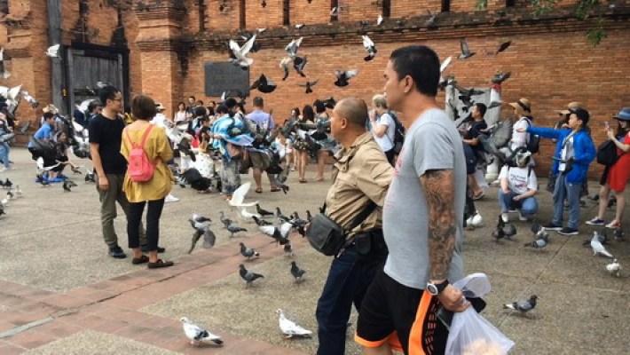 Les autorités de la ville de Chiang Mai ont demandé aux touristes de ne plus nourrir les pigeons, sous peine de se voir infliger une amende