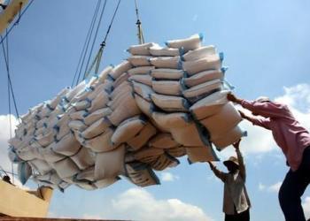 Vietnam : année difficile en perspective pour les exportateurs de riz