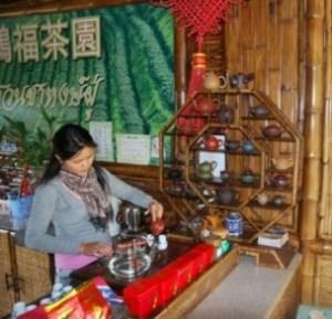 Annual Doi Mae Salong tea shop