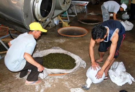 Doi Mae Salong tea factory