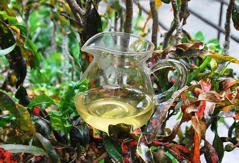 Green Tie Guan Yin from Anxi, Fujian, China: Gong Fu Cha in a colored bush in my garden