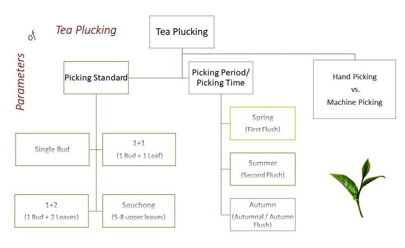 Paramters of tea plucking : picking standard, picking period and time, hand picking versus machine picking