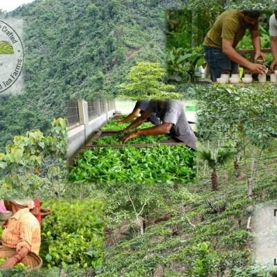 The Tea Leaf Theory - All-India Small Tea Farmers Association built on the principles of organic tea cultivation, fair prices, fair wages