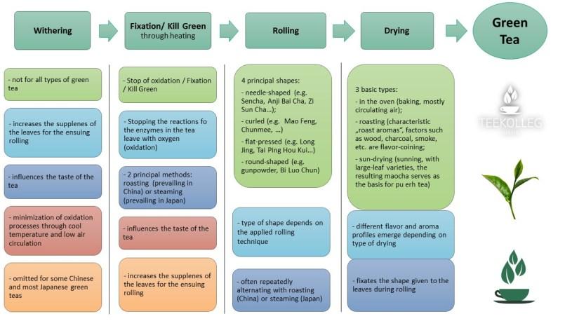 My Little Tea School - The ABC of TEA, Lesson 8.3. : Tea Processing - Green Tea Processing