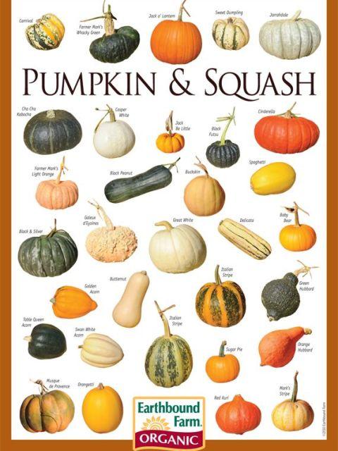 pumpkin chart