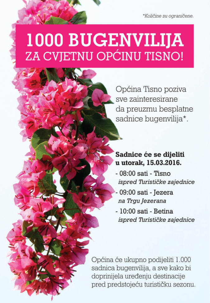 plakat_bugenvilije