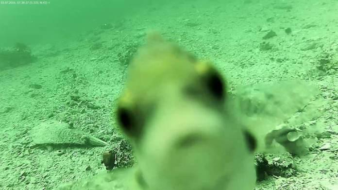 riba sibenik meteo