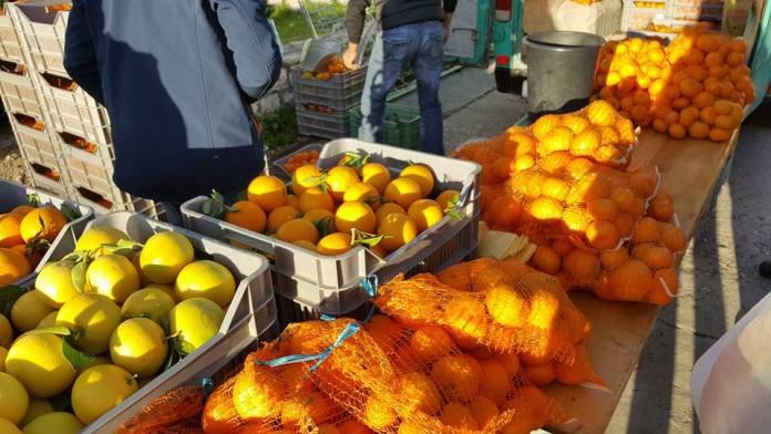 mandarine1711-2