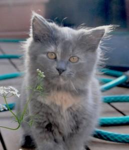 Kywy's Kitten