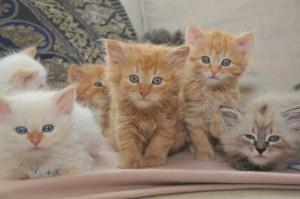 Kitten3-12-15