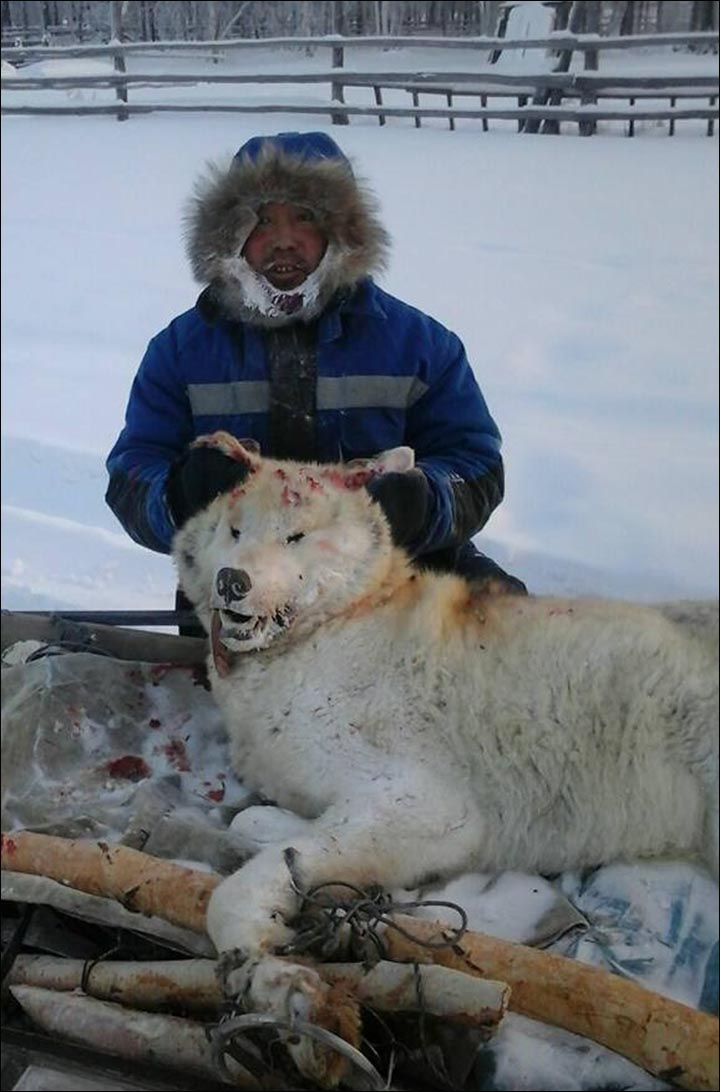 hunter killed giant wolf