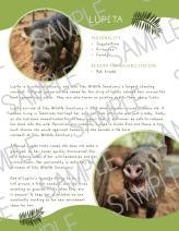 wildlife adoption fact sheet