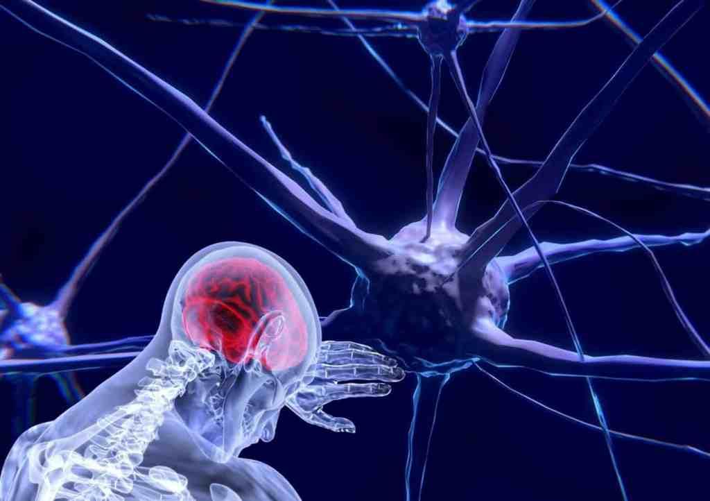 Gehirn Nerven Neuronen Schaltzentrale Netzwerk