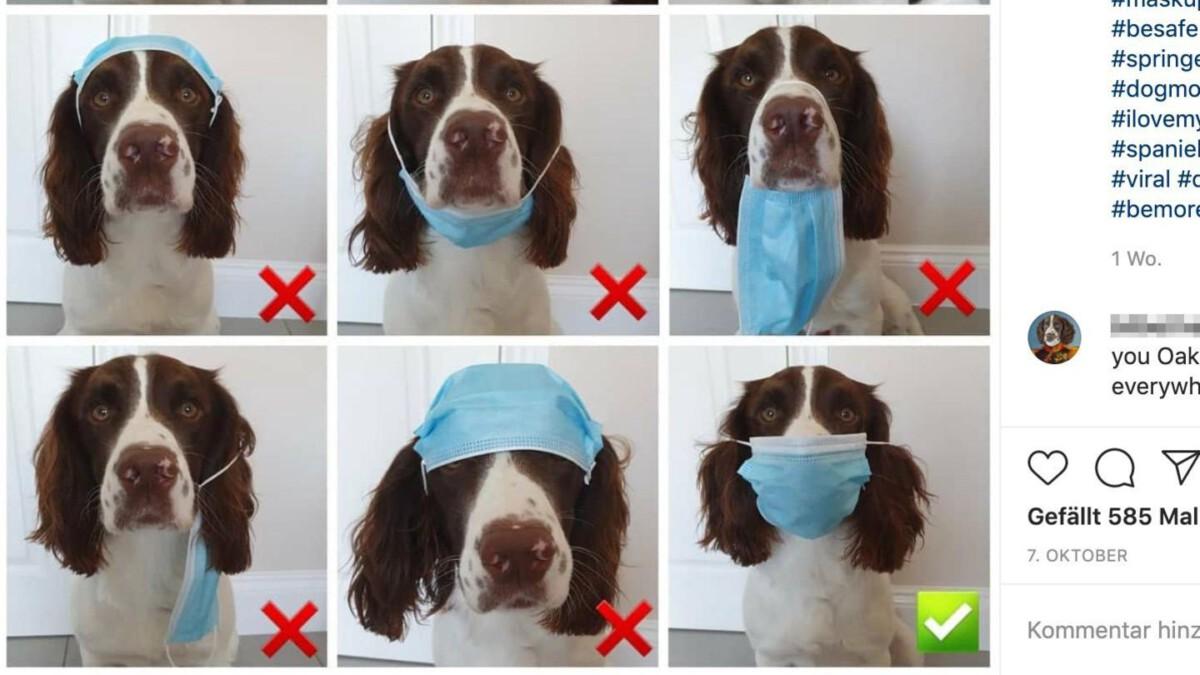 hund-traegt-maske