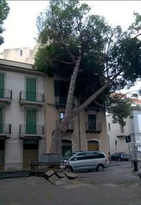 Albero caduto piazza San Sebastiano Barcellona 21-9-2015 a