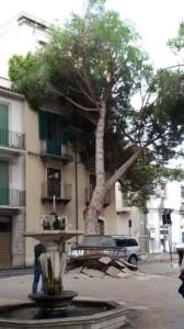 Albero caduto piazza San Sebastiano Barcellona 21-9-2015 b