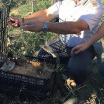 Guardia_di_FInanza_Ragusa_uccelli (2)
