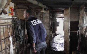 Polizia ragusa azienda agricola 4 (4)