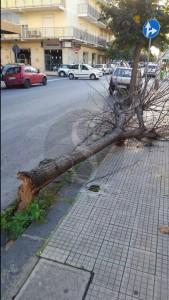 Albero caduto via kennedy, Barcellona 9-11-2015 a