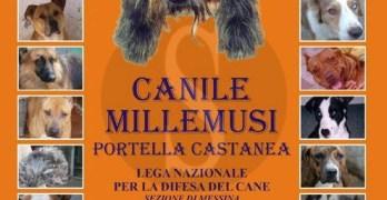 Canile Millemusi