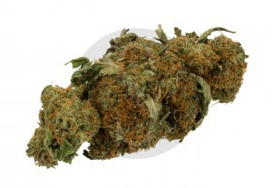 cannabis, droga, sicilians