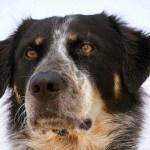 Il cane Ciak