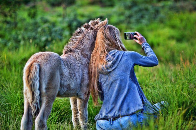 donna scatta foto con asinello