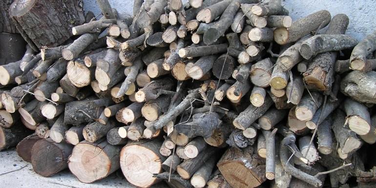 Friday Photo: The humble wood pile