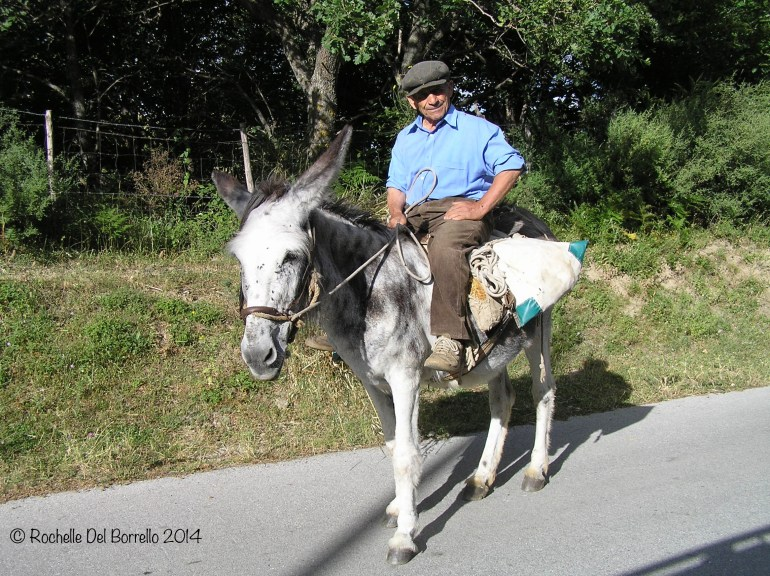 Man riding on a donkey province of Messina