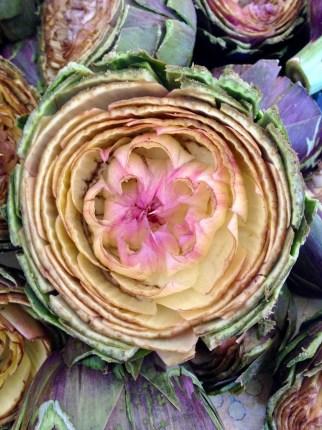Un fiore Siciliano