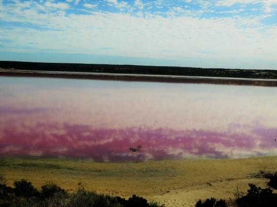 Pink lake2