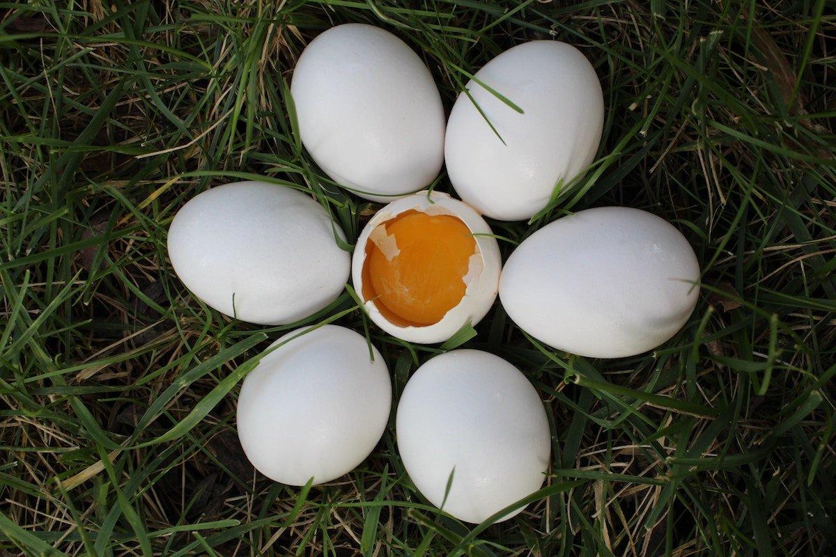 no uova crude