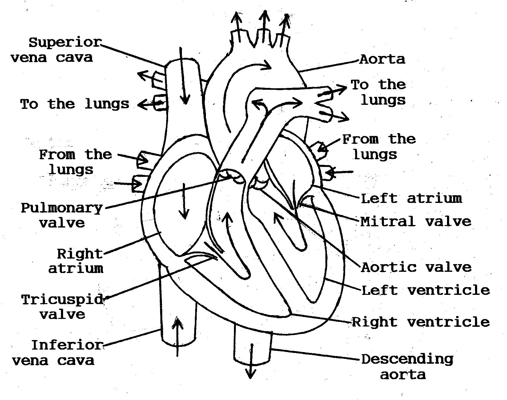 The Fantastic Pacemaker System