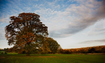 autums_tree1