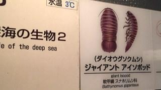 深海のダンゴムシ ダイオウグソクムシがいる水族館(東京都江戸川区)