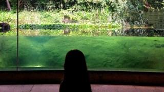 オトナになって行く水族館〜葛西臨海水族園みどころ(東京都江戸川区)
