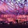あしかがフラワーパークの藤のイルミネーションがすごい!駐車場・割引券(栃木県足利市)