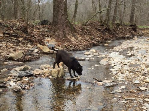 Lola, the family pup, explores the creek.