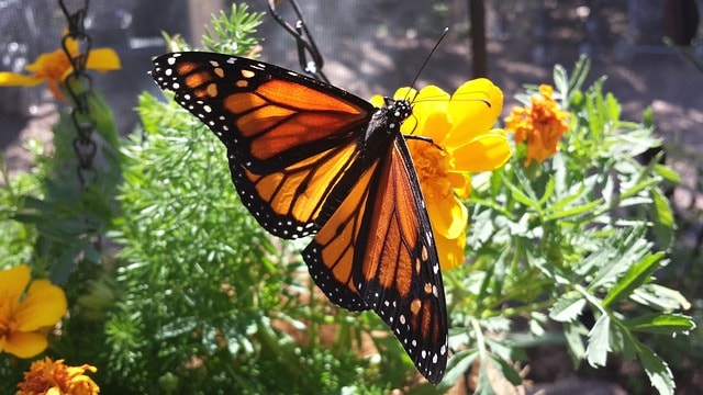 How I Got 5 More Minutes with My Mom - Butterfly Reflections