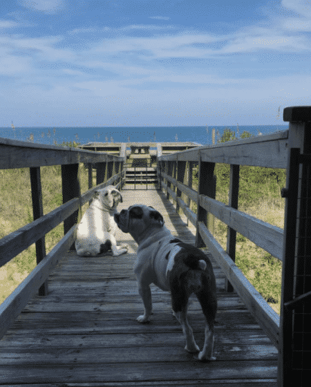 bulldogs beach vacation pier walkway