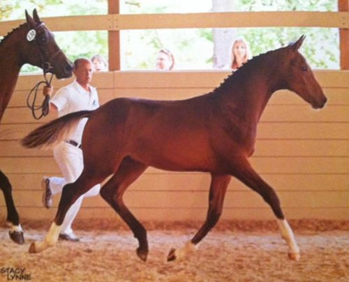 Hero, born 2012 Photo by Stacy Lynne